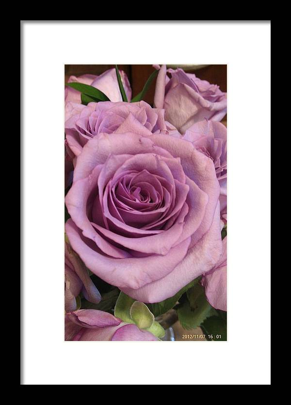 Purple Framed Print featuring the photograph Purple Rose by Marie Millard