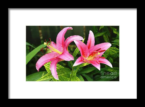 Flowers Framed Print featuring the photograph Purple Sensation Watercolor 2008 by Steve Augustin
