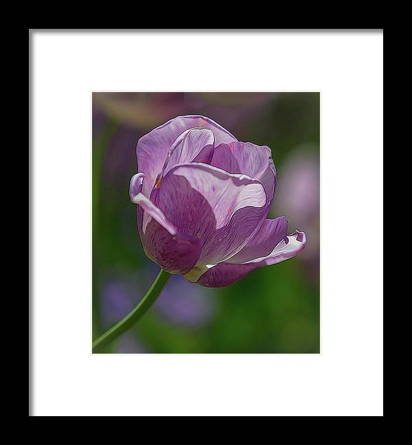 Atlanta Framed Print featuring the photograph Purple Tulip by Mark Chandler