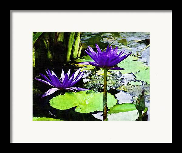 Flower Framed Print featuring the photograph Purple Water Lilies by D W Steinbarger