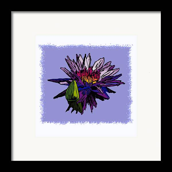 Water Lily Framed Print featuring the drawing Purple Water Lily by John Lautermilch