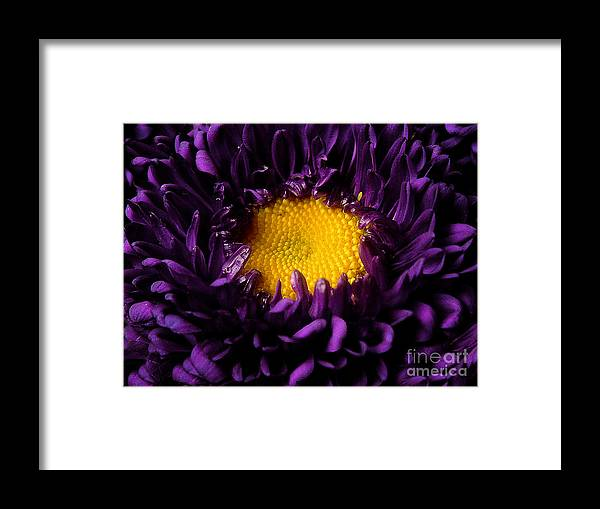 Nature Framed Print featuring the photograph Purples - Zooming To The Center by Lucyna A M Green