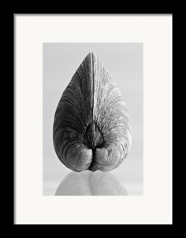 Abstract Framed Print featuring the photograph Quahog Number 1 by Henry Krauzyk