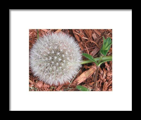 Nature Framed Print featuring the photograph Que La Nature Est Belle... by Line Gagne