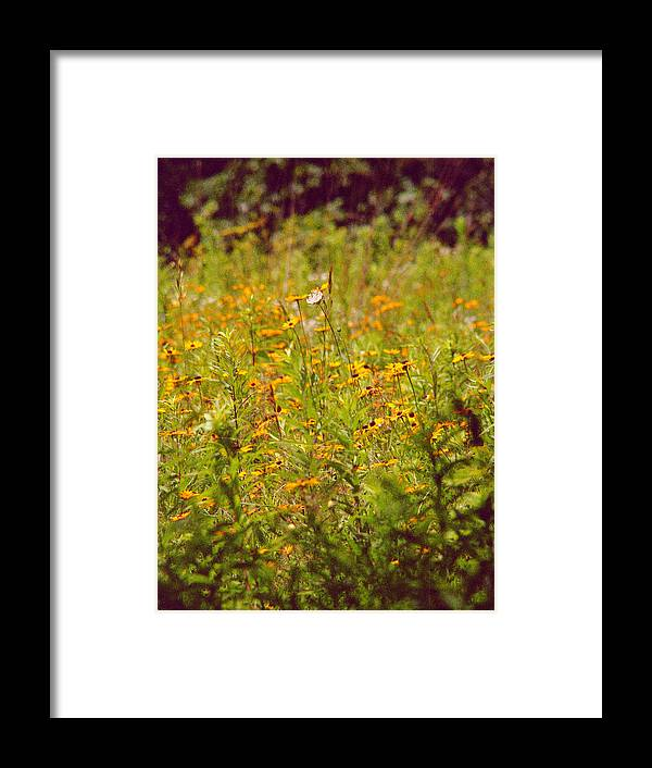 Flower Framed Print featuring the photograph Queen Ann by Randy Oberg