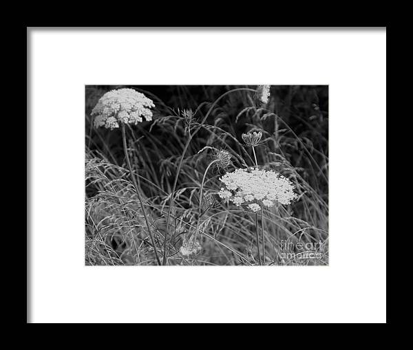 Flowers Framed Print featuring the photograph Queen Annes Lace by Jean Tippens