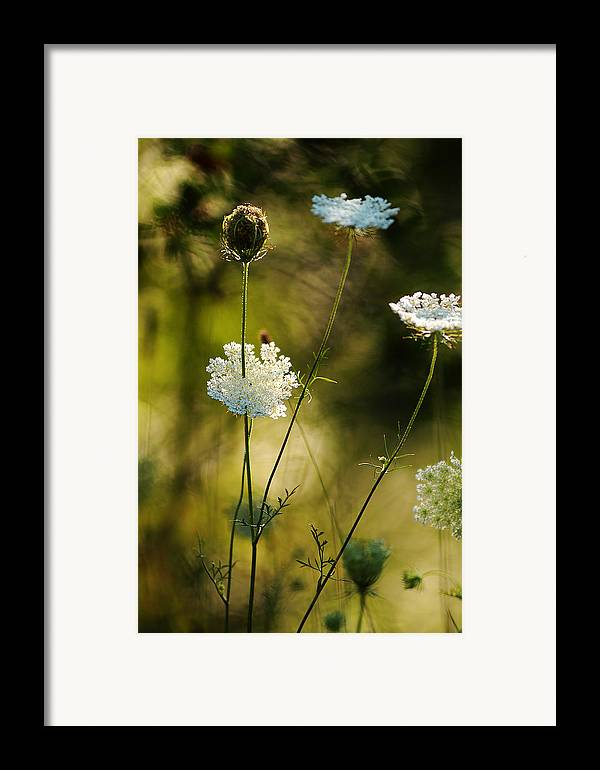 Wildflowers Framed Print featuring the photograph Queen Annes Waving by Linda McRae