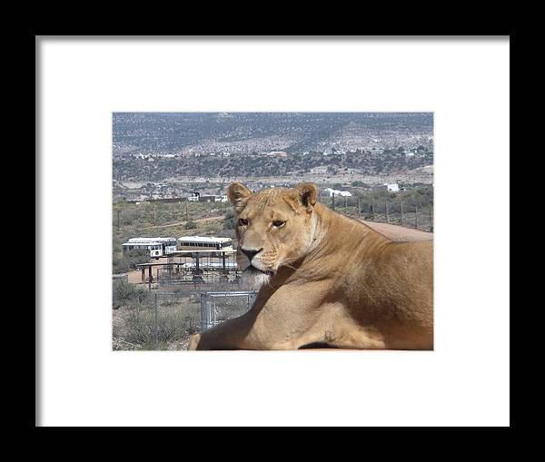 Lion Framed Print featuring the photograph Queen Of The Mountain by Jeanette Oberholtzer