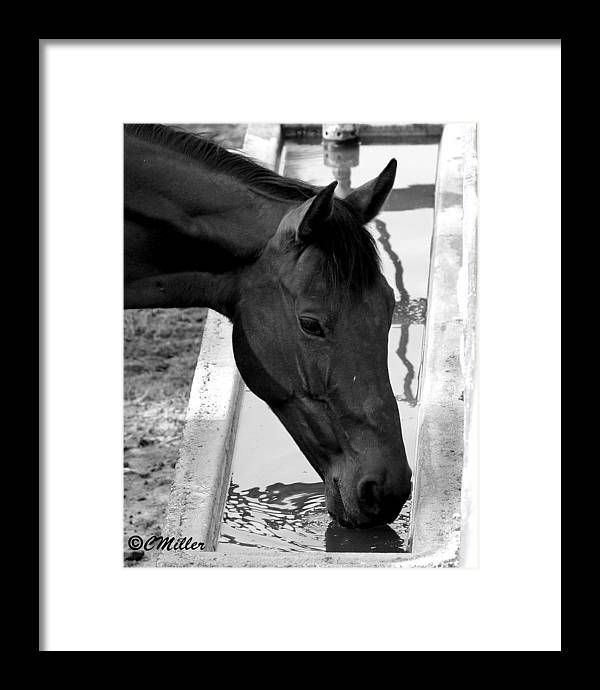 Western Framed Print featuring the photograph Quenching The Thurst by Carol Miller