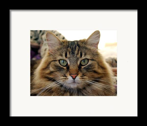 Cats Framed Print featuring the photograph Quentin by Heather S Huston