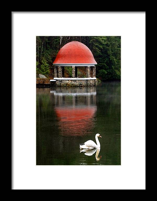 Swan Framed Print featuring the photograph Quiet Afternoon by William Bray