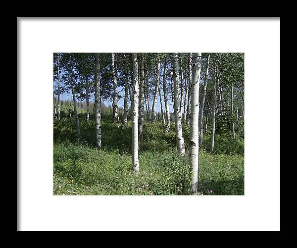Trees Framed Print featuring the photograph Quiet Forest by Susan Pedrini