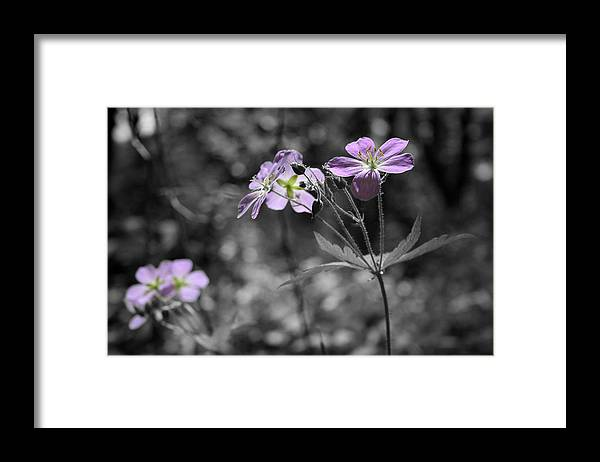 Wildflowers Framed Print featuring the photograph Quiet Gatherings by Dylan Punke