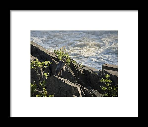 Bird Framed Print featuring the photograph Quiet Moments by Christina Durity