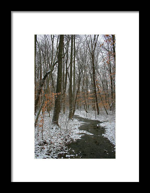 Forest Woods Water Winter Tree Snow Cold Season Nature Framed Print featuring the photograph Quite Path by Andrei Shliakhau