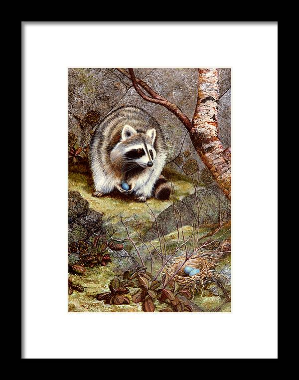 Raccoon Found Treasure Framed Print featuring the painting Raccoon Found Treasure by Frank Wilson