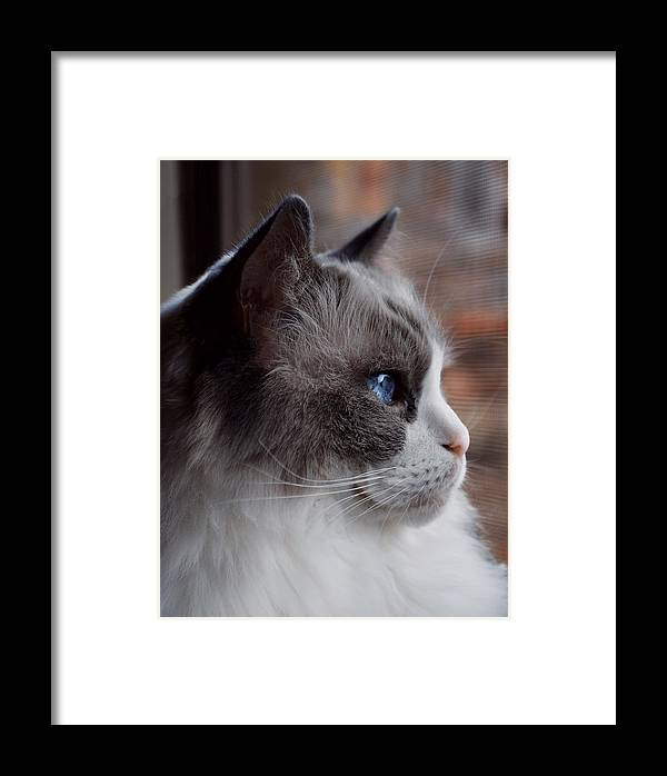 Framed Print featuring the photograph Ragdoll by Emily Miller