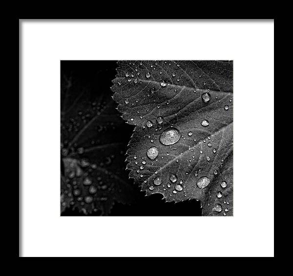 Rain Drops Framed Print featuring the photograph Rain Drops On Leaf by Robert Ullmann