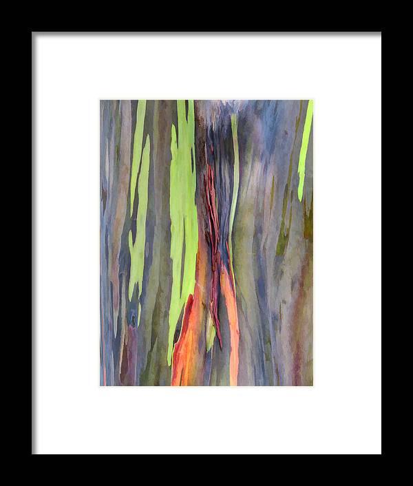 Hawaii Framed Print featuring the photograph Rainbow Eucalyptus 13 by Dawn Eshelman