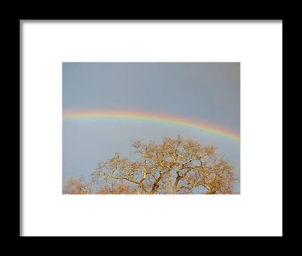 Rainbow Framed Print featuring the photograph Rainbow Illumined Oak Tree by Andrea Freeman