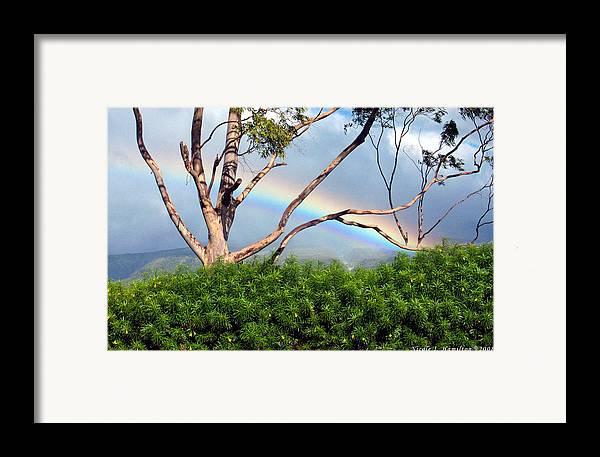 Rainbow Framed Print featuring the photograph Rainbow In The Trees by Nicole I Hamilton