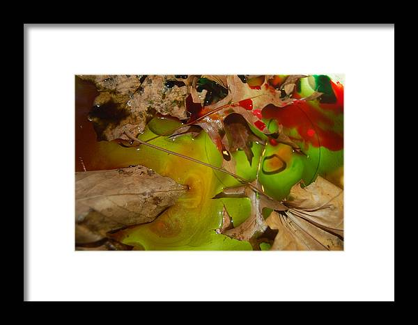 Abstract Framed Print featuring the photograph Rainbow Leaves 3 by Alwyn Glasgow