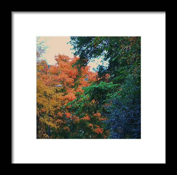 Trees Framed Print featuring the photograph Rainbow Of Fall by Trudi Southerland