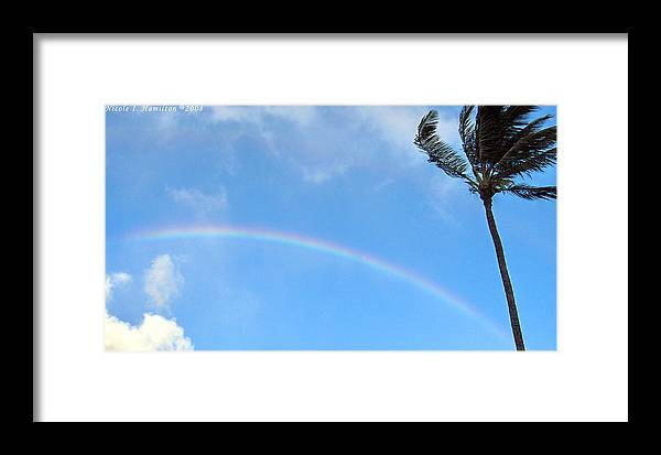 Palm Tree Framed Print featuring the photograph Rainbow Palm by Nicole I Hamilton