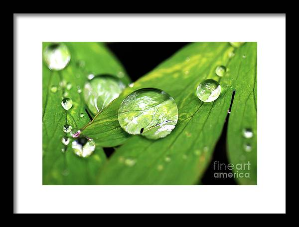 Macro Framed Print featuring the photograph Raindrop by John Rizzuto