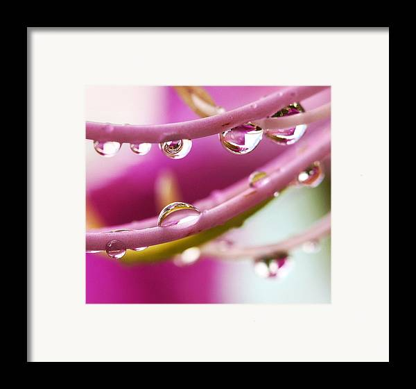 Amherstia Framed Print featuring the photograph Raindrops by Marilyn Hunt