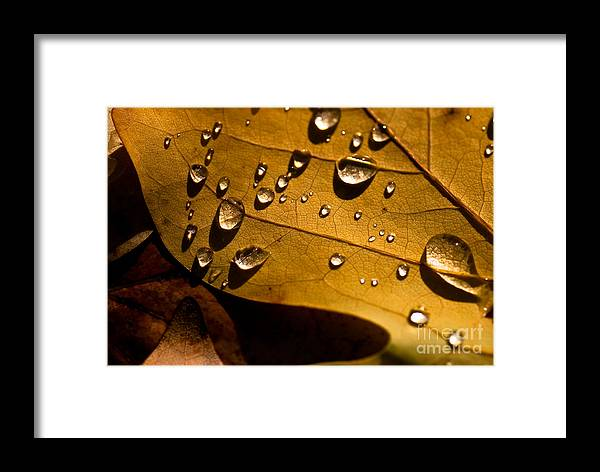 Beauty In Nature Framed Print featuring the photograph Raindrops On Leaf by Venetta Archer