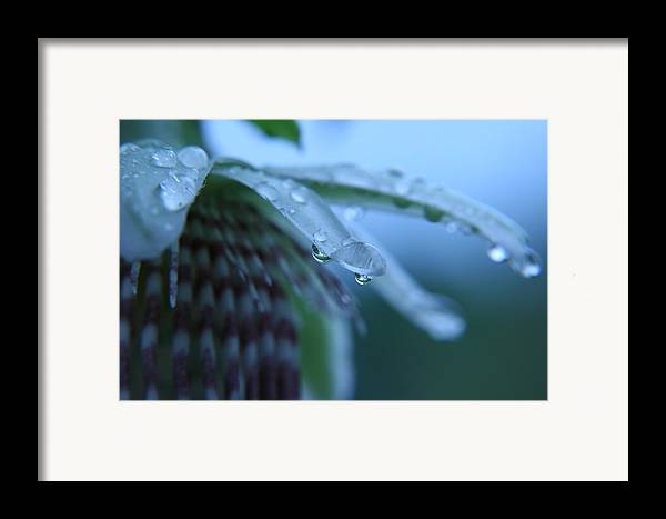 Rain Framed Print featuring the photograph Rainflower by Linda Russell