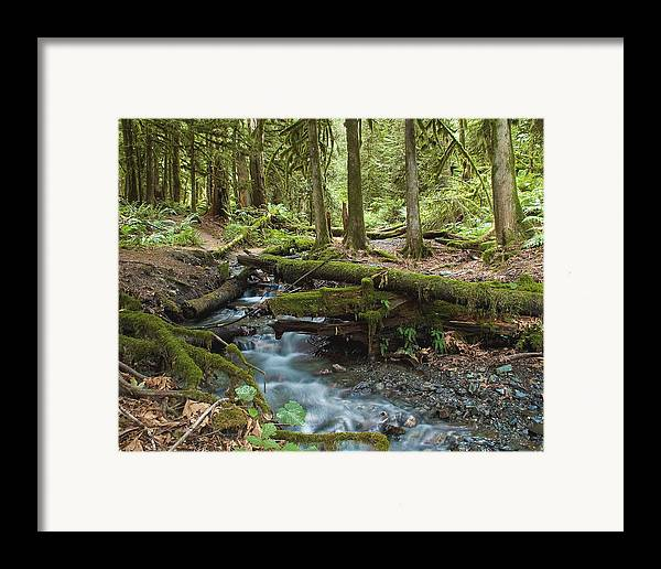 Stream Framed Print featuring the photograph Rainforest At Bridal Veil Falls - British Columbia by Linda McRae