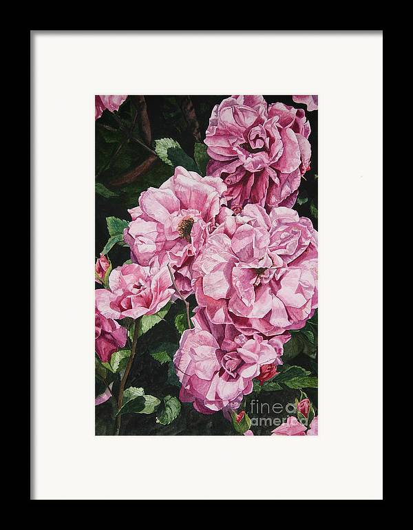 Floral Framed Print featuring the painting Ramblin Rose by Helen Shideler