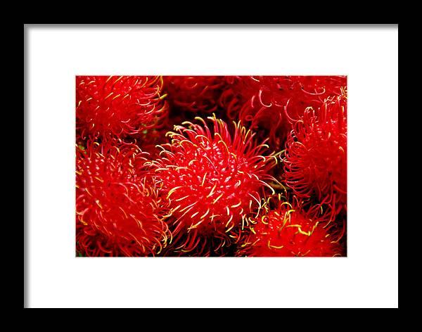 Rambutan Fruits Framed Print featuring the photograph Rambutan by Dragica Micki Fortuna