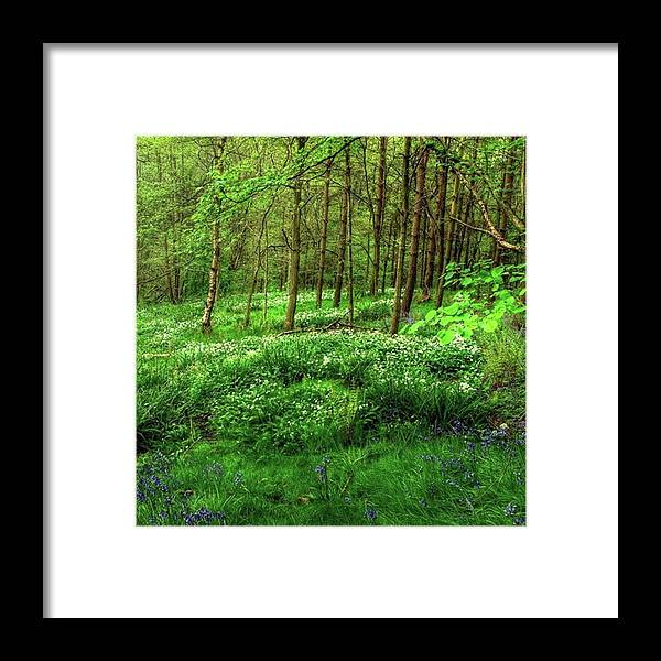 Nature Framed Print featuring the photograph Ramsons And Bluebells, Bentley Woods by John Edwards