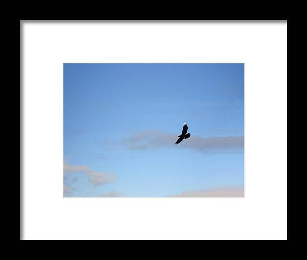 Raven Framed Print featuring the photograph Raven by Marilynne Bull