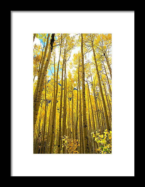 Colorado Framed Print featuring the photograph Reach For The Sky by Bill Keiran