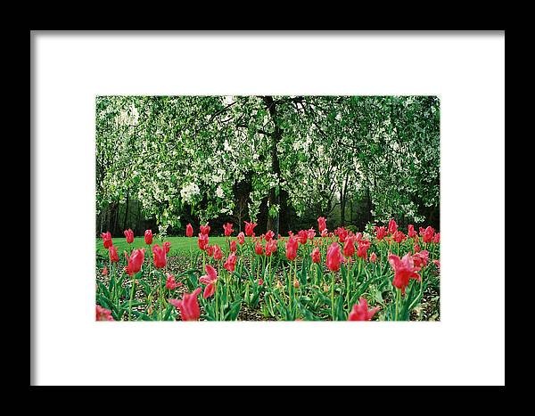 Tree Framed Print featuring the photograph Reach High by Jonathan Michael Bowman