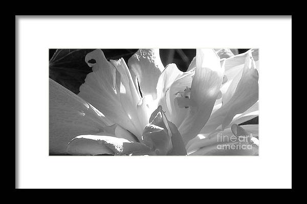 Black And White Flower Framed Print featuring the photograph Reach by James Temple