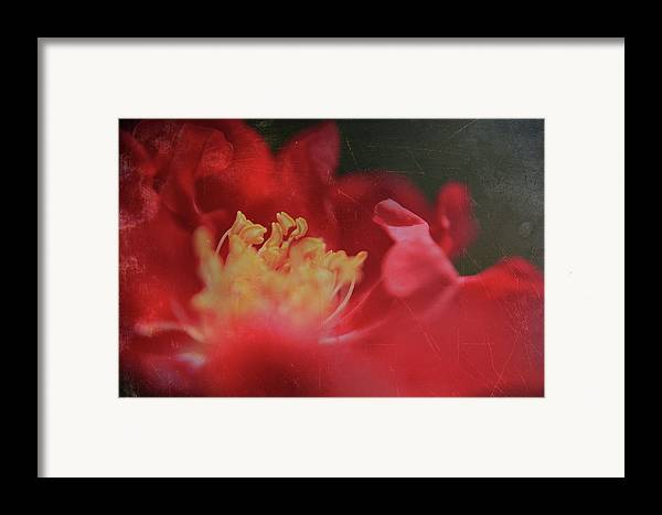 Macro Framed Print featuring the photograph Reaching For Joy by Laurie Search