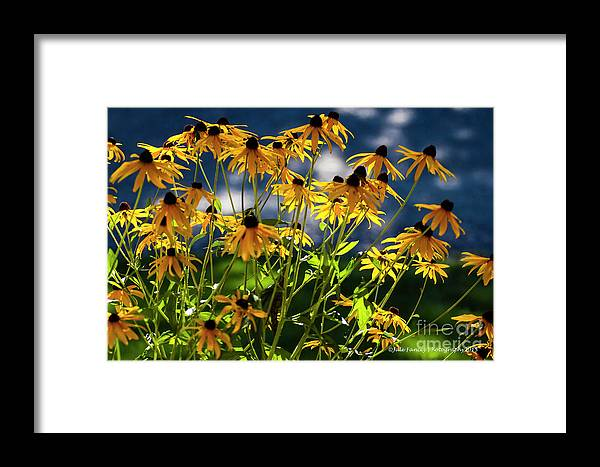 Flowers Framed Print featuring the photograph Reaching For The Blue Sky by Jale Fancey
