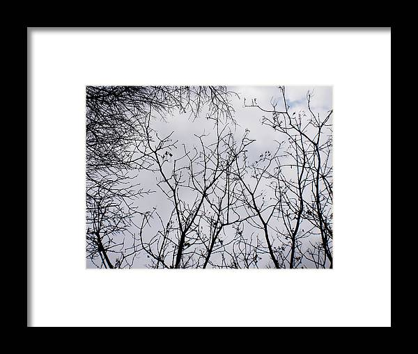 Trees Framed Print featuring the photograph Reaching For The Skies by Trilby Cole