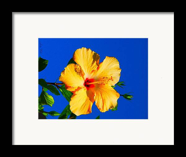Flower Framed Print featuring the photograph Reaching For The Sky by Judy Waller