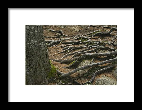 Tree Framed Print featuring the photograph Reaching by Jeff Porter