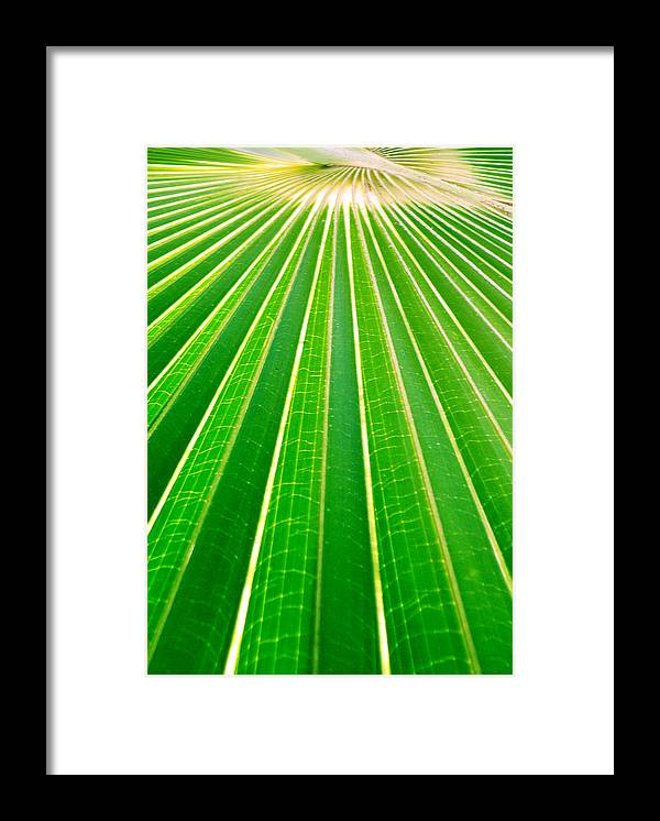 Nature Framed Print featuring the photograph Reaching Out by Holly Kempe