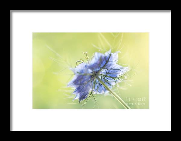 Floral Framed Print featuring the photograph Reaching Out.... by LHJB Photography
