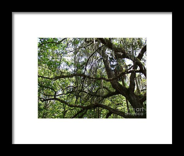 Tree Framed Print featuring the photograph Reaching by Stephanie Richards