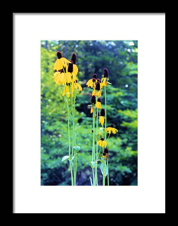 Flowers Framed Print featuring the photograph Reaching Up by Jan Amiss Photography