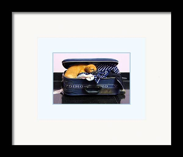 Dog Framed Print featuring the photograph Ready To Fly by Pradeep Subramanian